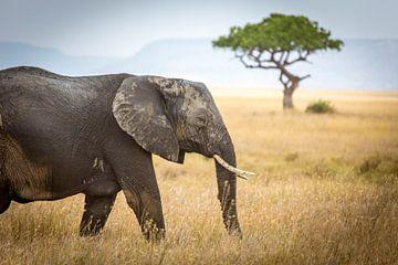 Olifant op de Serengeti van Julian Buijzen