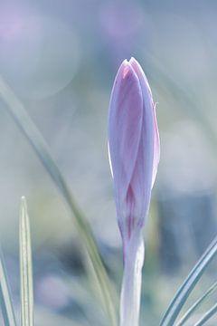 Flieder Frühling von Sem Viersen