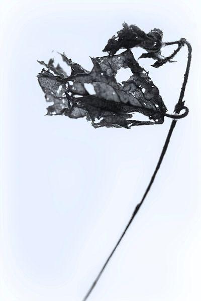 Fading Nature 2 van Pieter van Roijen