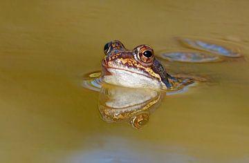 Der Frosch von Caroline Lichthart