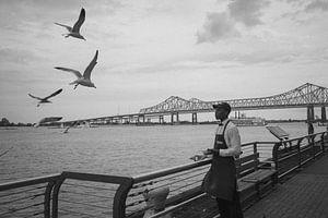 Vögel an der Uferpromenade