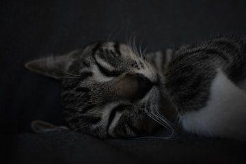Nooit slapende katten wakker maken van Highthorn Photography