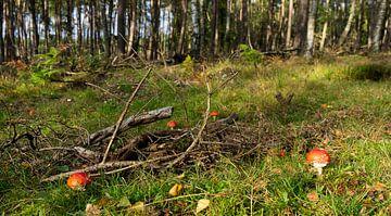 Pilzkreis im Wald von Jannieke