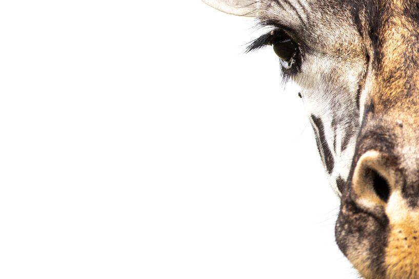 In eye-sight - een giraf portret van Sharing Wildlife