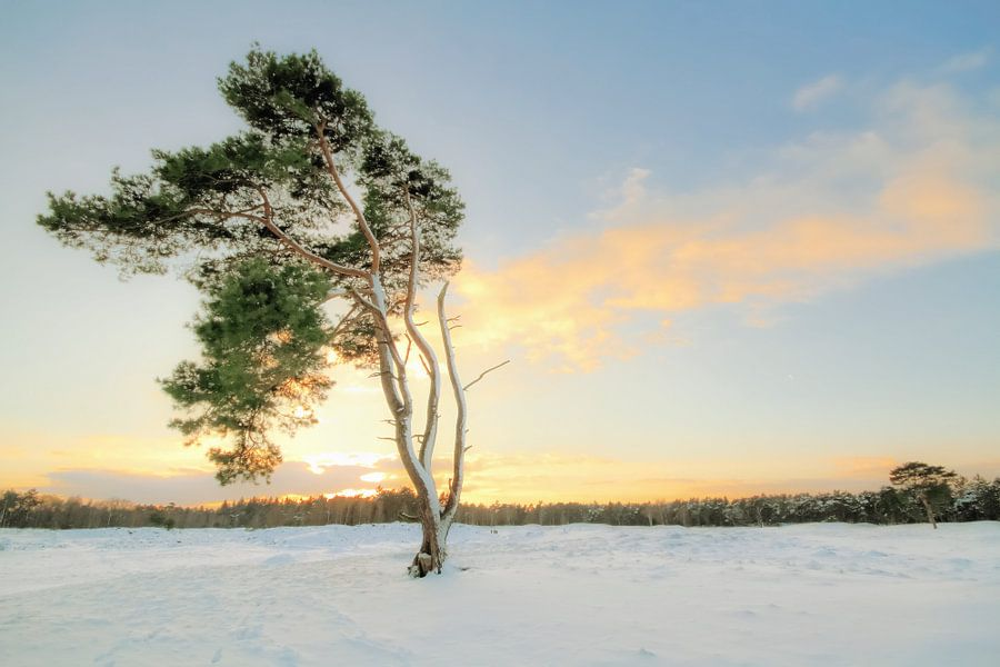My Lone Tree