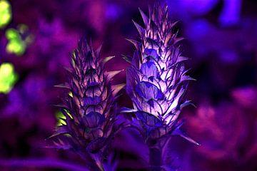 Acanthus mollis paars van Adriana Zoon
