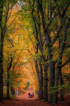 Zeit für einen Spaziergang! von Robin Pics (verliefd op Utrecht)
