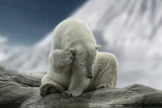 Eisbär I