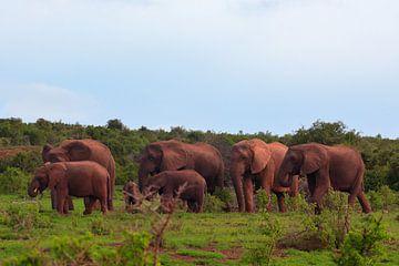 'Kudde olifanten is onderweg.' van Capture the Moment 010