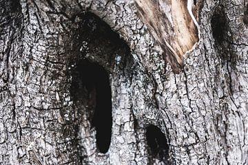 Schors van een oude verweerde boom van Gerben Duijster