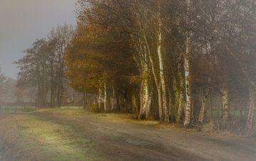 Misty morning sur Teo Goudriaan