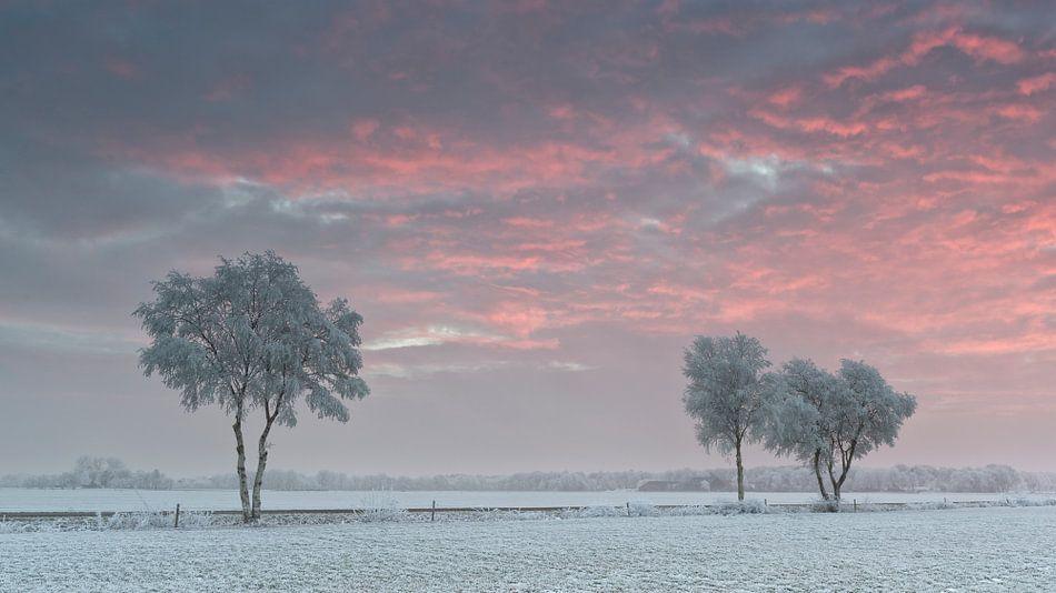 Bomen met rijp in de zonsondergang