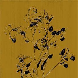 Monnaie du pape en imprimé botanique, jaune ocre sur Joske Kempink