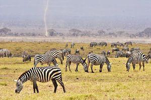 Grazende zebra's in Amboseli National Park (Kenia)  van Esther van der Linden