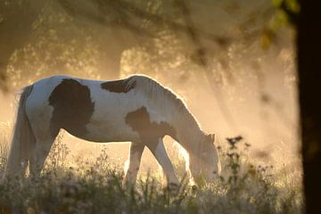 paard in de wei van