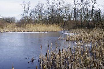 Wintergezicht van Ad Steenbergen