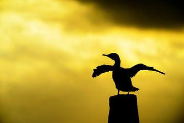 Cormorant at sunset von rik janse