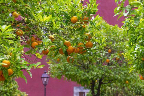 Zomerse sinaasappelbomen in Lissabon, Portugal van