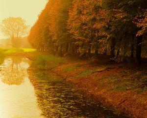 Herfstbomen aan sloot met nevel