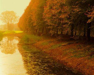 Herfstbomen aan sloot met nevel van Anneriek de Jong