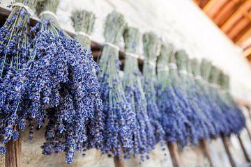 Lavendel von Wim Demortier