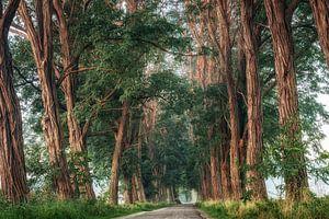 Door het sprookjesbos