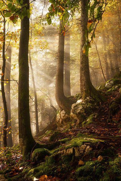 Een dag in het bos van Martin Podt