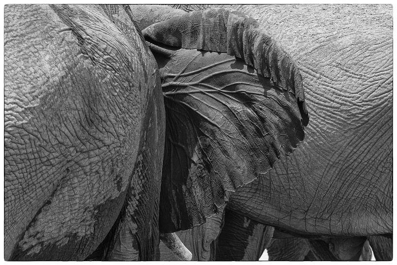 Olifantenoor van Ellen van Schravendijk
