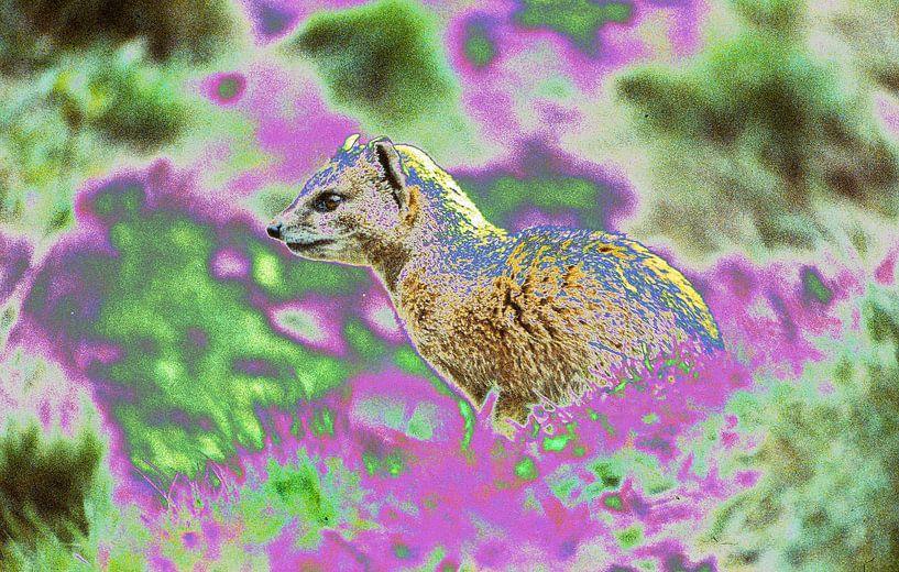 Mongoose van Ronald Jansen