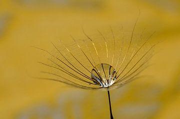 Wassertropfen im Gelben Morgenstern von Marlies Reimering