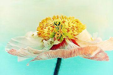 Lady Poppy 2 van Angela Dölling