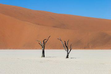 Tweeling bomen in dead vlei van OCEANVOLTA