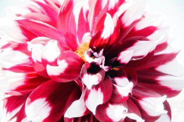 Blumen in Highkey von Roland de Zeeuw fotografie