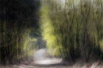 Auszug aus dem Wald von Ingrid Van Damme fotografie