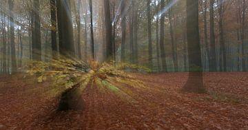 Spetterende herfst van Han Bouwmeester
