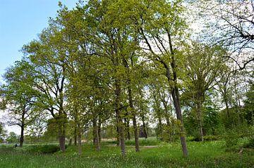 Hohe Bäume von Lisanne Rodenburg