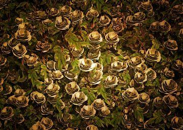 Rosen - weiße Rosen von Jan Keteleer