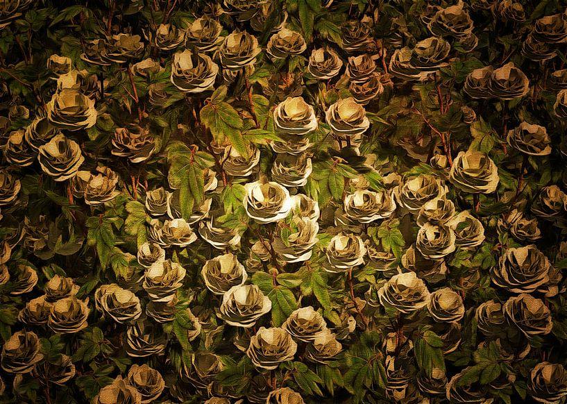 Rozen - witte rozen van Jan Keteleer