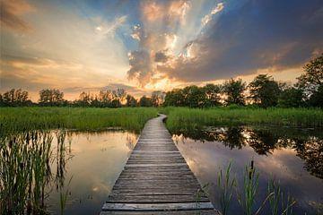 Beekbergerwoud, zonsondergang van