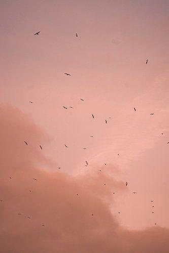 Vogels bij een Parijse roze lucht.