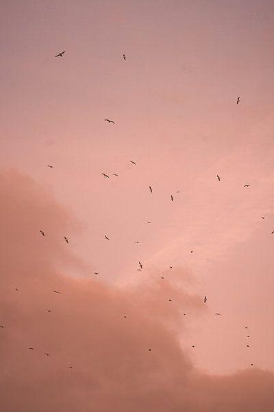 Vogels bij een Parijse roze lucht. van Jordi Sloots