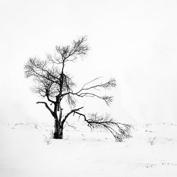 its cold von Guy Lambrechts