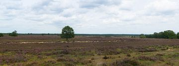 Ermelo Heidekraut-Panorama von Gerard de Zwaan