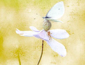 Schmetterling mit Textur von natascha verbij