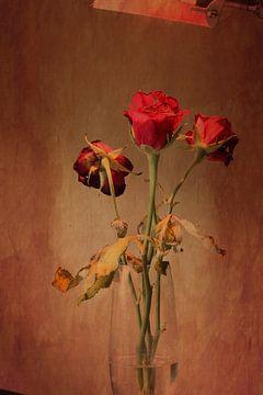 Rosen van Markus Wegner