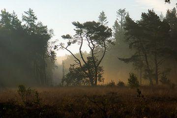 des arbres dans la lumière dorée sur Tania Perneel