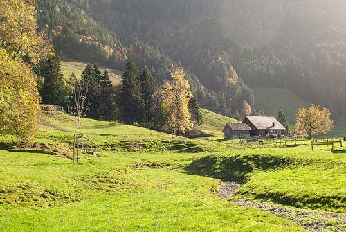 Alpenweide in de late herftszon van