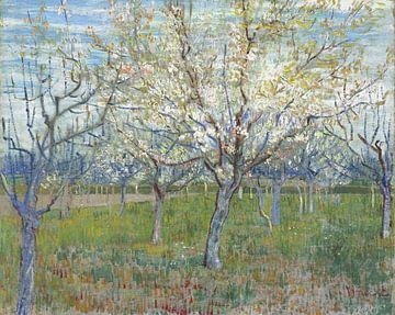 Obstgarten mit blühenden Aprikosenbäumen, Vincent van Gogh
