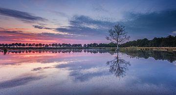 1 boompje in het water tijdens zonsondergang von