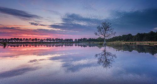 1 boompje in het water tijdens zonsondergang van